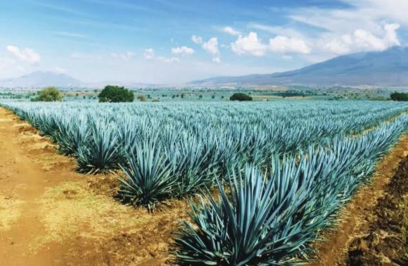 Mar, Tequila y Mariachi